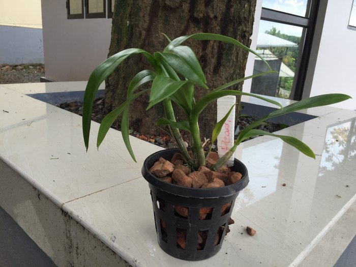 Buy Orchid Pots Online Purchase Orchid Pots Black